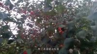 东丰视频美女v视频+美女41899156_Q.Qfcmp_的手机游戏好玩美女图片