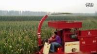 冀新牌穗茎兼收玉米收获机、青饲料收割机、青贮机 标清
