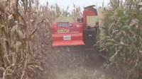太湖收割机收割玉米
