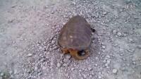 当啮龟的怒气值攒满了以后。。。