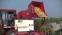 收割机收割玉米【2015.9.20、21】
