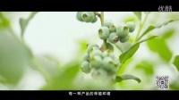 食品安全坚守者——宣传片【吃的好商城】