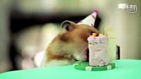 史上最搞笑的小老鼠和小刺猬过生日吃蛋糕,萌宠萌翻了