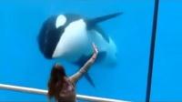 国外菇凉在水族馆发现鲸鱼会和自己互动。。。