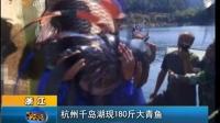 杭州千岛湖现180斤大青鱼 早安山东—在线播放—优酷网,视频高清在线观看