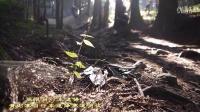 视频: 张家界黄石寨极限自行车速降
