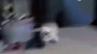 一只嚣张的狗硬生生被喵吓成了猪。。。