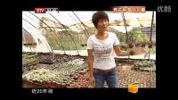 北京百花仙子�@多肉植物北京最大的�N植基地央�采�L��l