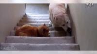 没见过这么怂的汪星人,猫狗大战