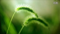 綠度母经咒(颂唱)
