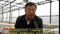 农业科技大棚吊袋木耳管理要点立体种植高产栽培技术视频