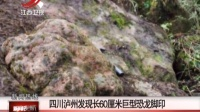 四川泸州发现长60厘米巨型恐龙脚印 新闻夜航 151111
