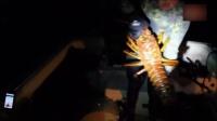 [爆新鲜]美国男子捕获70岁超大龙虾 重达5.4公斤