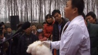 视频: 长毛兔 舞阳鑫华兔业高效繁殖技术研讨会