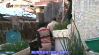 TV 动物农场 151115