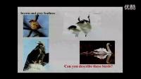 """初中英语教学视频 Birdwatching 教学视频,2015年全省教育系统教学技能竞赛""""信息技术创新教学""""项目现场决"""
