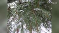 我的图片MV_201511250331终南第一场雪