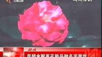 昆明金殿茶花新品种名字面世 云南新闻联播 20151127