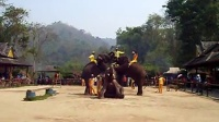 大象7 叠加