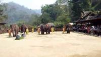 大象5 跳舞