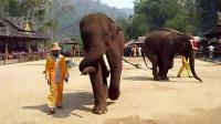 大象6 示礼节
