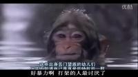 【爆笑配音】动物世界 笑得尿飙