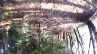 视频: 大林岗蝌蚪拍摄
