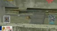 视频: 山西西安:狗试验后放天台涉事医学院回应151208在线大搜索