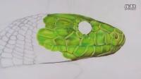 牛人手绘一条超逼真绿色的蛇 (延时摄影)