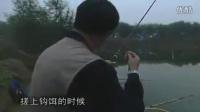 十一月份水库钓鲤鱼什么饵最好