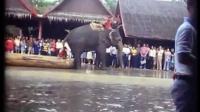 视频: Bangkok crocodile elephant shows 1978