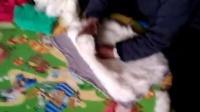 奶奶做棉衣