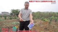 三红蜜柚苗施肥与防治病虫害视频