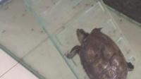 小乌龟爬楼梯