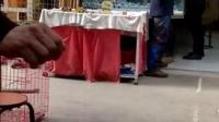 廊坊-体会,传统弓15度小夹角打法实操。铁丝儿一发必弯!!!!!