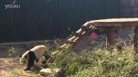zoo-熊猫