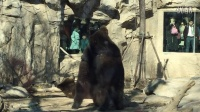 zoo-🐻