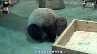20160217讓圓仔湯圓更彈Q的秘技大公開 The Giant Panda Yuan Zai.pds