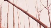 逗比爬树#我身边的舞神##萝莉正太卖萌日记##广场舞##我是吉他弹唱达人##萝莉正太卖萌日记##情人节/劫##情人节/劫