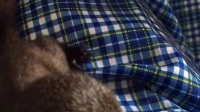 视频: 专业出售魔王松鼠成鼠,孕鼠,幼崽自家繁殖出货,可零售可批发招代理,联系电话:18225087975,qq:454093196