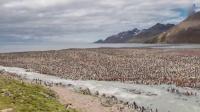 猪头传媒 2016 2月 近20万只帝企鹅齐聚大西洋小岛 160225