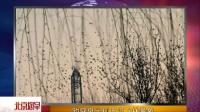 趵突泉出现万鸟飞林景象 北京您早 160227—在线播放—优酷网,视频高清在线观看