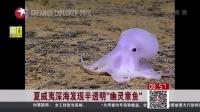 """看东方20160307夏威夷深海发现半透明""""幽灵章鱼"""" 高清"""