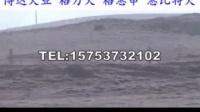 郑州哪里有卖格力犬幼崽的