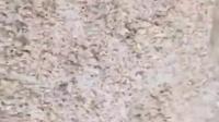 黑芝麻核桃藕粉羹制作过程