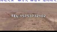 郑州哪里有卖打场格力犬的