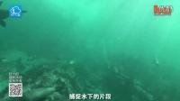 被大白鲨追逐是一种什么样的体验?