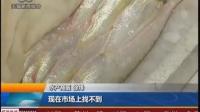 无锡新闻—一斤8000元长江刀鱼天价上市