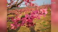 我爱炜霞-爱在桃花盛开的日子里