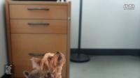 视频: Working Dogs - Accountant Interview